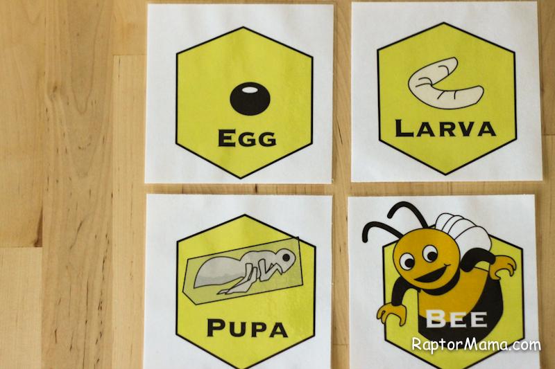 Raptormama B is for Bumblebee_-8
